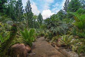 jardim da evolução no jardim botânico, Singapura
