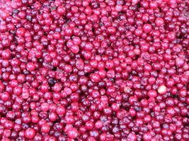 lingonberries. foto