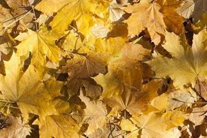folhas de outono imagem colorida de folhas de outono como fundo foto