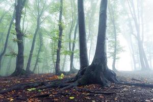 raízes da vida na névoa