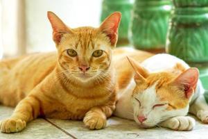 dois gatos dormindo e acordando foto