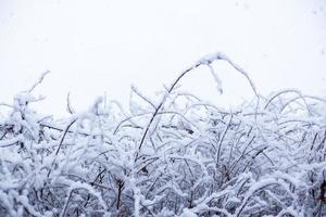 neve, cena de neve, coberto de neve no Japão foto