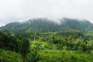 Indonésia - selva tropical no rio, bornéu foto