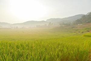 campo de arroz na montanha.