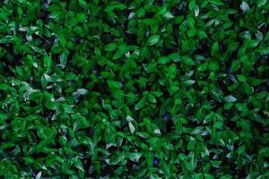 textura de folhas verdes