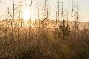 galhos de árvores enevoados sob luz solar intensa