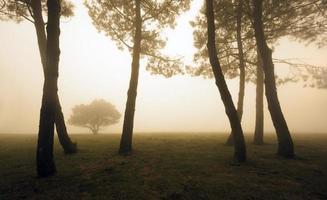 árvores pela manhã