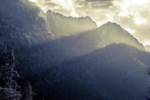 montanhas com árvores na neblina