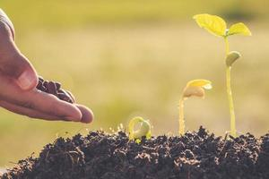 mão segurando a semente e o crescimento de uma jovem planta verde