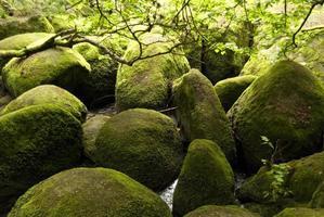 reserva natural doost foto