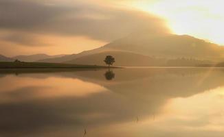 árvore sozinha no lago foto