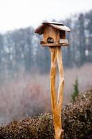 alimentador de pássaros foto