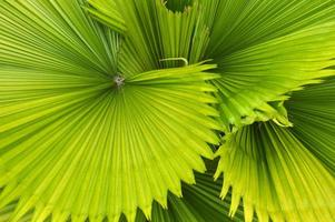frond