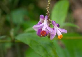 pequenas flores roxas