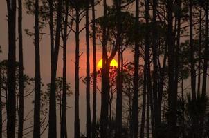 pôr do sol por entre as árvores de um pântano da Flórida