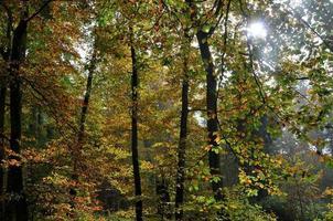 Bunter Wald Im Herst