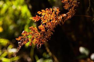 folhas de samambaia