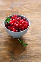 cranberries maduras em uma tigela foto