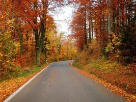bela estrada de outono foto