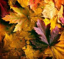 fundo de folhas de outono foto