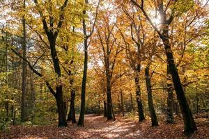 trilha de caminhada na floresta no outono, holanda foto