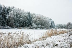 paisagem de inverno com neve e árvores foto