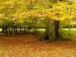 cor de outono