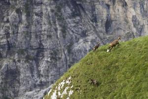 vida na montanha foto