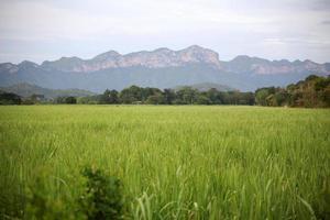 prado e montanha