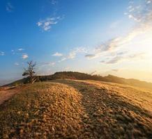 grama nas montanhas foto