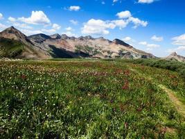 flores silvestres, trilha do Colorado e pico dente de tubarão foto