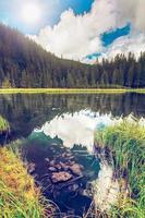 verão montanha lago forrest