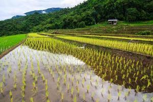terraços de arroz na montanha foto