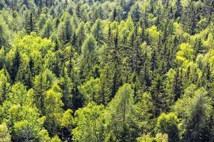 detalhe das árvores da montanha