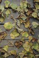 folhas de outono como pano de fundo na superfície de madeira foto