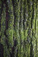 árvore de textura