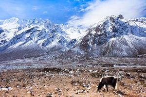 parque nacional de latang, nepal