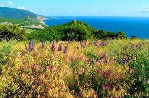 flores silvestres nas montanhas foto