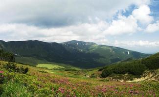 flores de rododendro rosa mágico nas montanhas.