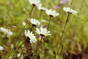 belas flores na montanha