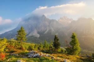 árvore no nascer do sol na grande montanha ao fundo