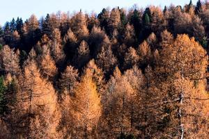 folhagem na floresta foto