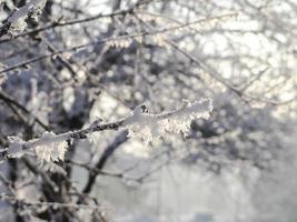 galho coberto de gelo e neve