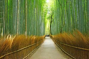 ranhura de bambu foto