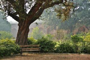 banco debaixo da árvore no parque foto