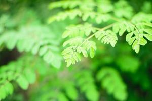 folhas verdes foto