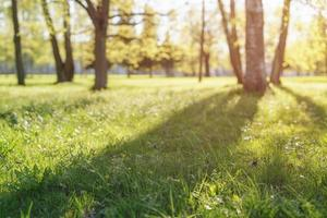 show de baixo ângulo em parque com longas sombras