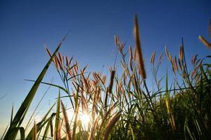 campos de grama na montanha