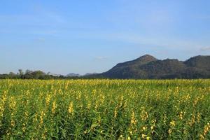 área de fazenda do país para a montanha.