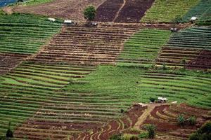 fazenda de vegetais na montanha